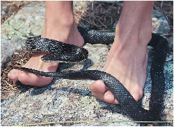 grey rat snake around feet